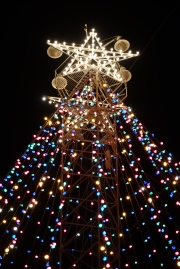 Zilker Tree Star