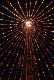 Swirlie Inside the Zilker Tree