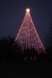 Zilker Tree
